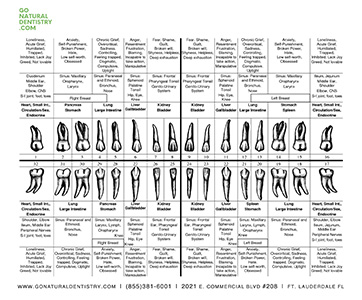 Holistic Dentistry Fort Lauderdale - Download Meridian Tooth Chart (PDF)